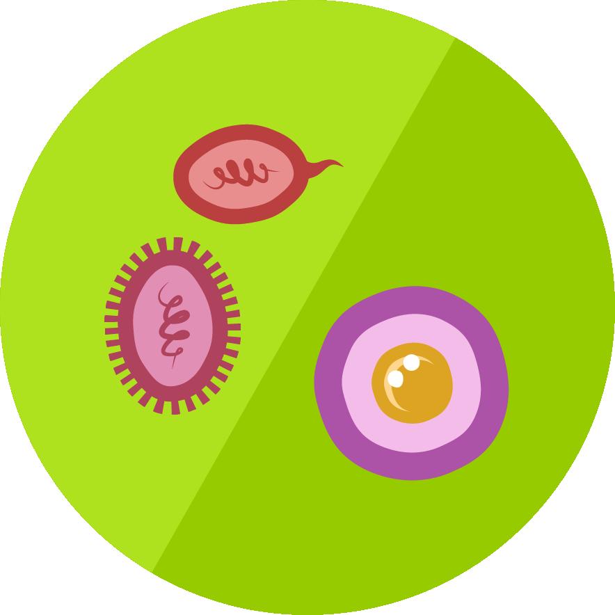 Biologie - Zellarten und Zelltypen